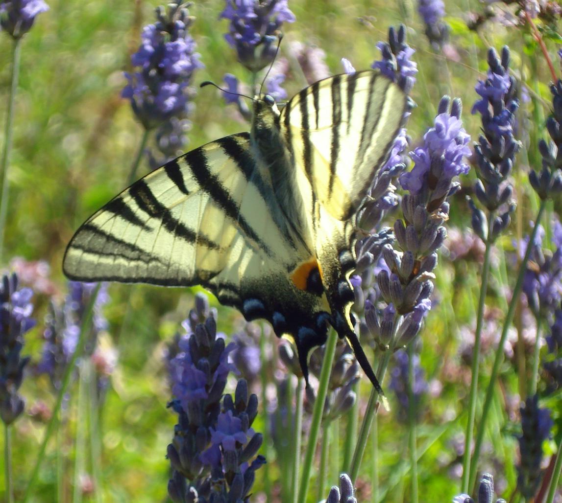 Natureparif rencontres naturalistes